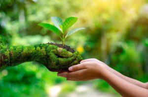 compostabilità_biodegradabilità